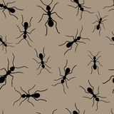 Ant repetitions. Seamless wallpaper with black ants Royalty Free Stock Photo