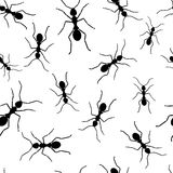 Ant repetitions. Seamless wallpaper with black ants Stock Photo