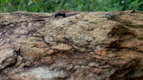 Ant on the rock. Nature created the beauty Royalty Free Stock Photography