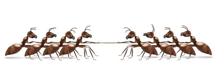 Ant rope pulling business or sport competition Royalty Free Stock Photos