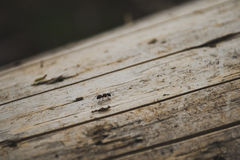 The ant runs on a tree  Royalty Free Stock Image