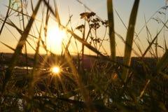 Ant& x27; s-Augenansicht, die durch Schattenbildblumengras in den Sonnenaufgängen schaut Stockbild