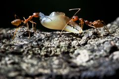 Ant's life Royalty Free Stock Image