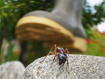 Ant's life is danger. Garden ant saving life, running away from boot Royalty Free Stock Images