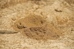 Ant's nest. Made from soil on the ground Stock Photo