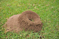 Ant's nest. The ant's nest on greensward Royalty Free Stock Photography