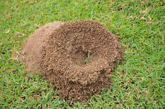 Ant's nest Royalty Free Stock Photo