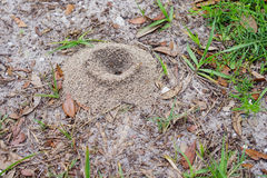 The ant's nest made by sand Stock Photo