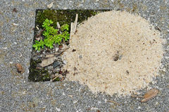 The ant's nest made by white sand Royalty Free Stock Photos
