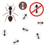 Ant Royalty Free Stock Image