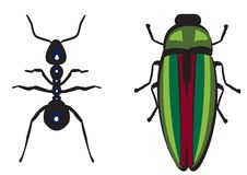 Ant&shiny green beetle Royalty Free Stock Image