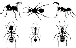 Ant silhouettes collection Stock Photo
