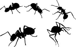 Ant silhouettes set Royalty Free Stock Image