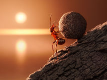 Ant Sisyphus rolls stone uphill on mountain. Concept stock image
