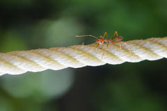 The ant Stock Photo