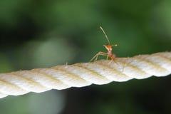 The ant Stock Photos
