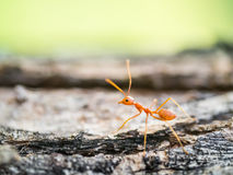Ant in the small world Stock Photography