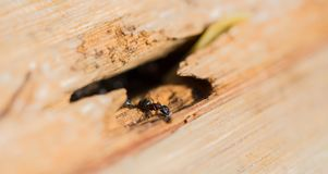 An ant with some sugar in a tree trunk Royalty Free Stock Photos