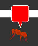 Ant with Speech Bubble Royalty Free Stock Photos