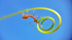 Ant on spiral Royalty Free Stock Image