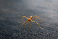 Ant standing on wooden floor Royalty Free Stock Image