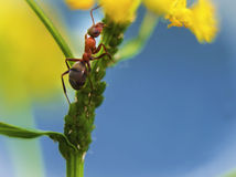 Ant. Stock Photo