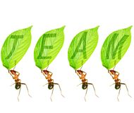 Ant Team Royalty Free Stock Photography