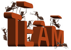 Ant teamwork team building or work cooperation. Ant team building or team working 3D word created or under construction by ants teambuilding team building or Stock Image