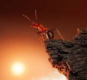 Ant on top of rock, mountain peak, concept Stock Photos