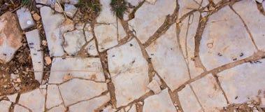 Ant Trail Image libre de droits