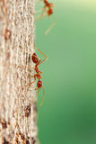 Ant on tree Stock Photos