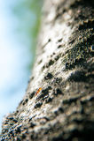 Ant and tree Royalty Free Stock Images