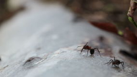Ant on a tree trunk stock video