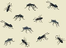 Ant. Vector drawing. Lot of dark eusocial Formicidae on light beigr fond. Linear ink drawn picture sketchy in doodle art retro style pen on paper. Close up vector illustration