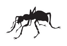 Ant. Vector drawing Stock Image