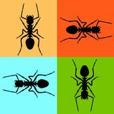 Ant vector illustration black silhouette set front stock illustration