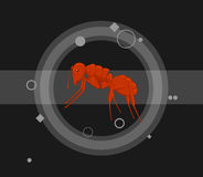 Ant Vector Illustration rosso Immagine Stock