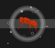 Ant Vetora Illustration vermelho Imagem de Stock