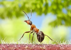 Ant walk in forest Stock Images