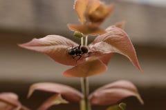 Ant Walking On una hoja Imagen de archivo libre de regalías
