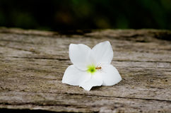 Ant and white flower Stock Image