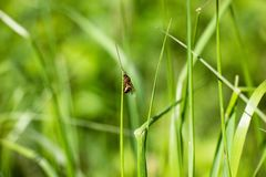 An ant with wings on the grass. The ant with wings sits on the grass. A very ugly insect crawling on the grass then down that up. Very beautiful and fascinating Stock Images