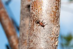 Ant at work Royalty Free Stock Photos