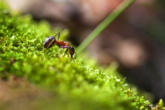 Ant work in the green grass Royalty Free Stock Images