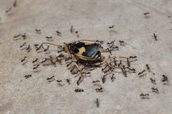 Ant workers Stock Photos
