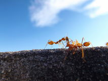Ant workers. With blue horizon Royalty Free Stock Photos