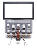 Ant working with digital computer, blank, isolated Stock Image