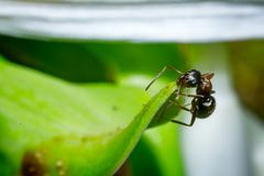 Ant working Stock Photo