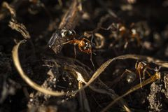 Ant working Royalty Free Stock Photos
