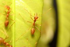 Ant working Stock Photos